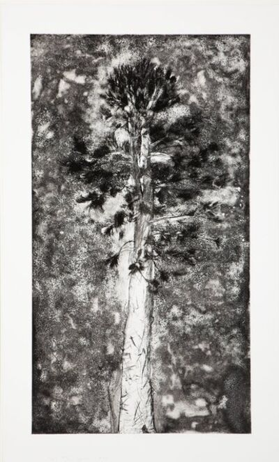 Jim Dine, 'The Pine in a Storm of Aquaint', 1978