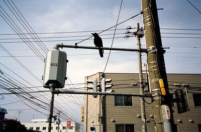 Ed Panar, 'Tokyo Morning', 2002