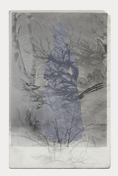 Sara Angelucci, 'Winter Forest', 2016