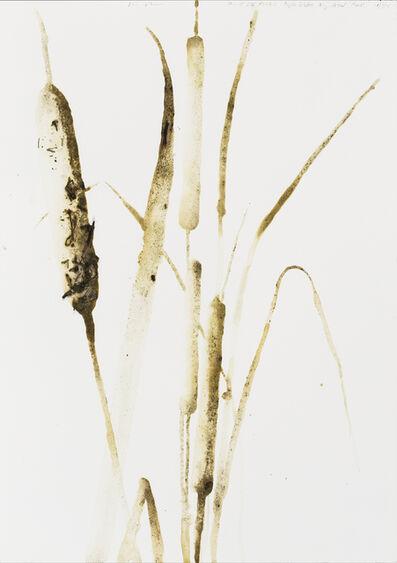 Alexis Rockman, 'Broadleaf Cattail (Typha latifolia)', 2014