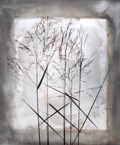 Alida Fish, 'Tall Grass', 2017