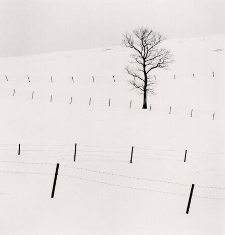 Michael Kenna, 'Tree and Twenty Eight Posts, Teshikaga, Hokkaido, Japan', 2013