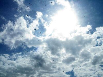 E. Brady Robinson, 'Birds & Sky', 2011