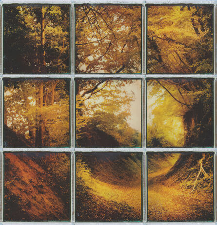 Ina Echternach, 'Every Path tells... - Contemporary, Conceptual, Women, Polaroid, 21st Century, Nature, Future', 2017