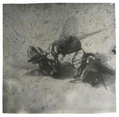 Zhang Xiao 张晓, 'Three Flies', 2015