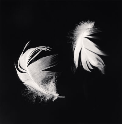Michael Kenna, 'Two Feathers, Courances, France', 1996