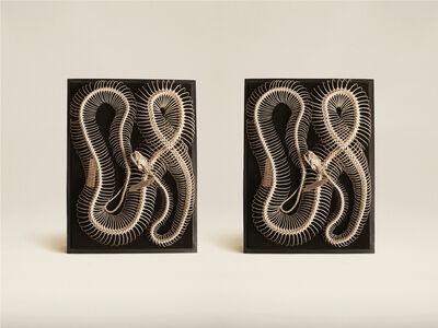 Jim Naughten, 'Diamond Python (Morelia Spilota)', 2015