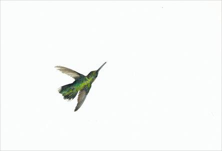 Kevin King, 'Ruby-throated Hummingbird', 2014