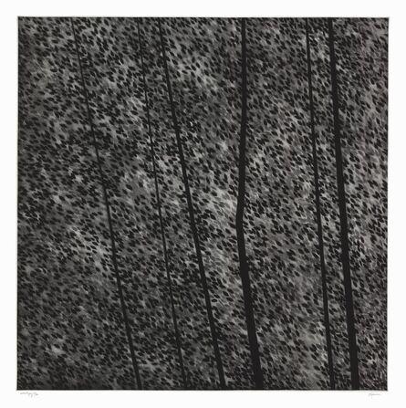 Robert Kipniss, 'A song of leaves.', 2013