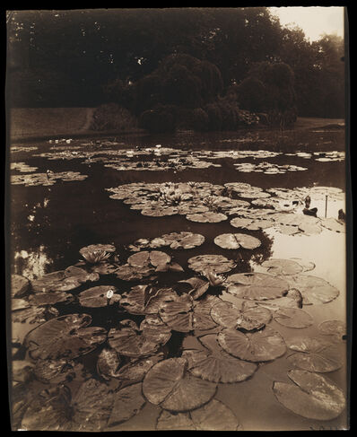 Eugène Atget, 'Water Lilies', 1890-1910