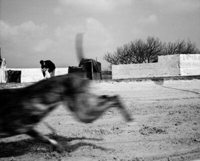 Chris Steele Perkins, 'Greyhound race, County Durham', 2002