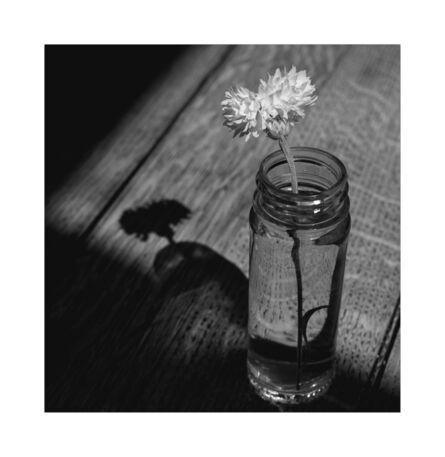 Masako Kano, 'Last Cornflower | Ultima Nigela ', 2020