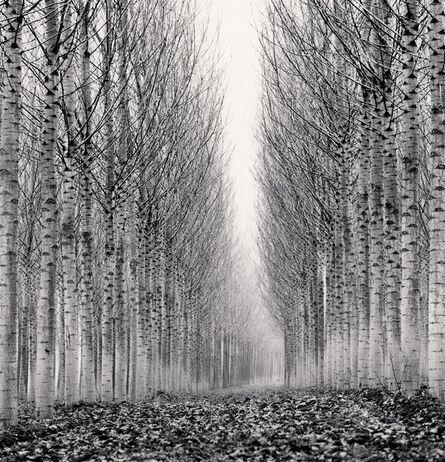 Michael Kenna, 'Corridor of Leaves, Guastalla, Emilia Romagna, Italy', 2006