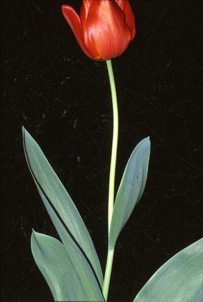 Unglee, 'Identité, Melun 10 avril 1990', 2001