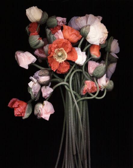 Joyce Tenneson, 'Poppy Bouquet'