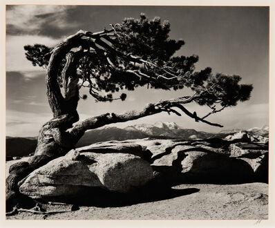 Ansel Adams, 'Jeffrey Pine, Sentinel Dome', 1940-printed later