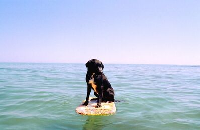 Matthew Murray, 'Untitled (Dog on Surfboard)', ca. 2004