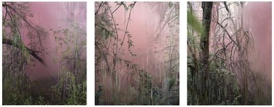 Sandra Kantanen, 'Untitled (Forest 17, 18 and 14)', 2019