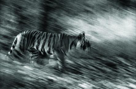 Akash Das, 'Untitled', 2011
