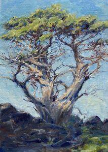 Tina Orsolic Dalessio, 'Monterey Cyprus, Point Lobos', 2020