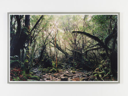 Thomas Struth, 'Paradise 15, Yakushima/Japan', 1999