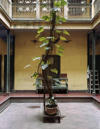 Laura McPhee, 'Split Leaf Philodendron, Dawn House, North Kolkata', 2005