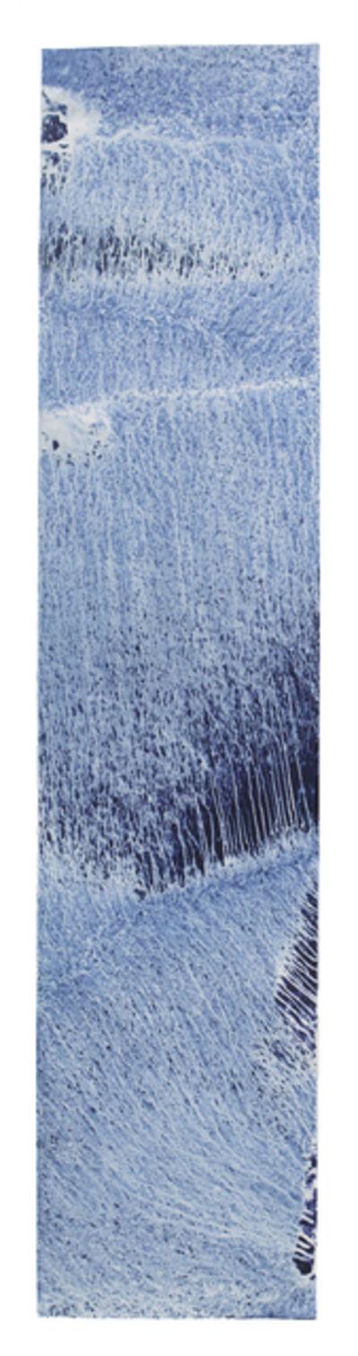 Meghann Riepenhoff, 'Ecotone #129 (Bainbridge Island, WA 02.01.17, Draped in Rain Garden, Mixed Precipitation)', 2017
