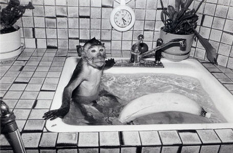 Robin Schwartz, 'Shibu, Crab Eating Macaque, male, 1 year old', .