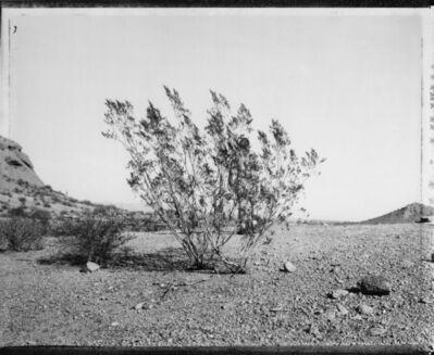 Mark Klett, 'Man behind creosote bush, Phoenix, 3/7/82', 1982