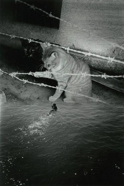Kosuke, 'WARNING #38', 2010