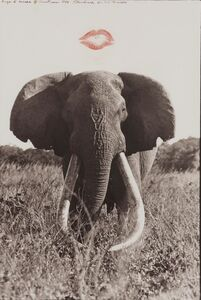 Peter Beard, 'Untitled [Elephant below Kiss]', 1995