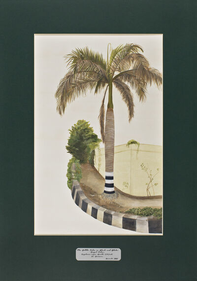 David Chalmers Alesworth, 'Trees of Pakistan - The Bottle Palm in Black and White ', 2013-2014