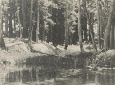 Ansel Adams, 'A Grove of Tamarack Pine', 1921