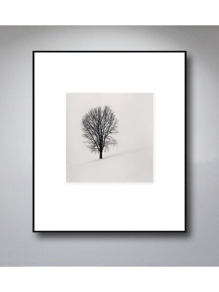 Michael Kenna, 'Philosopher's Tree, Biei, Hokkaido, Japan, 2004', 2004