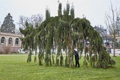 João Tabarra, 'Tree lumper, Karlsruhe', 2017