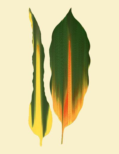 Andrea Wolf, 'Codiaeum Variegatum, var. 034', 2020