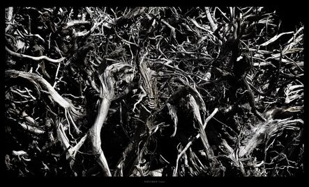 Toru Tanno, 'SPECIMEN †roots', 2016