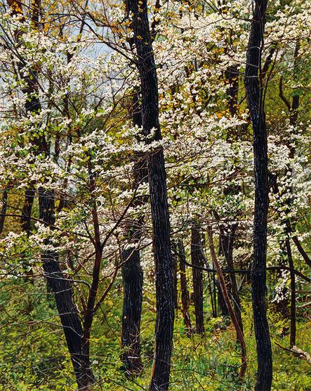 Jeffrey Vaughn, 'Thicket No. 41: Spring Dogwood', 2015