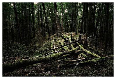 Bernhard Quade, 'Green Forest | New Zealand', 2015