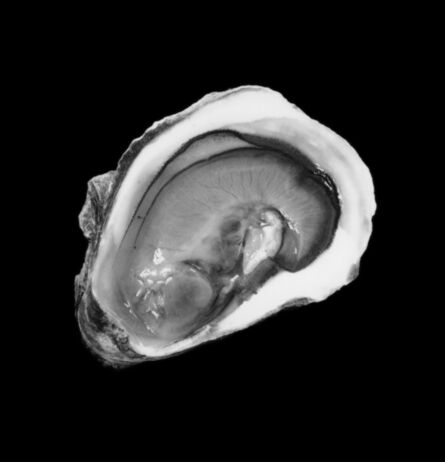 Mariana Cook, 'Oyster, New York City, 10 October 2001', 2001