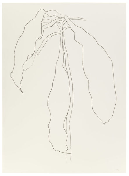 Ellsworth Kelly, 'Dracena II', 1983-1985