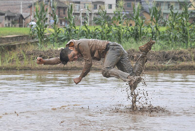 Binyuan Li, 'Freedom farming', 2014