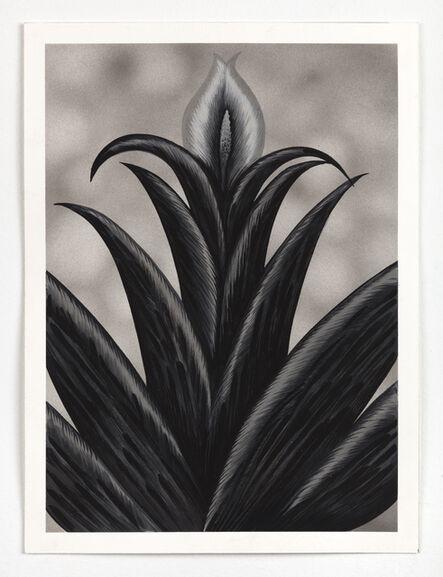 Julie Curtiss, 'Succulent', 2020