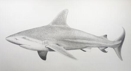 Hannah Hanlon, 'Sandbar Shark', 2020