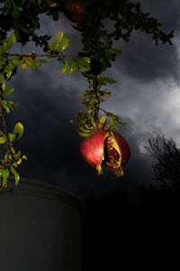 William Joe Josephs Radford, 'Low Hanging Fruit', 2020