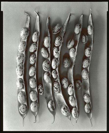 Olivia Parker, 'Shell Beans', 1977