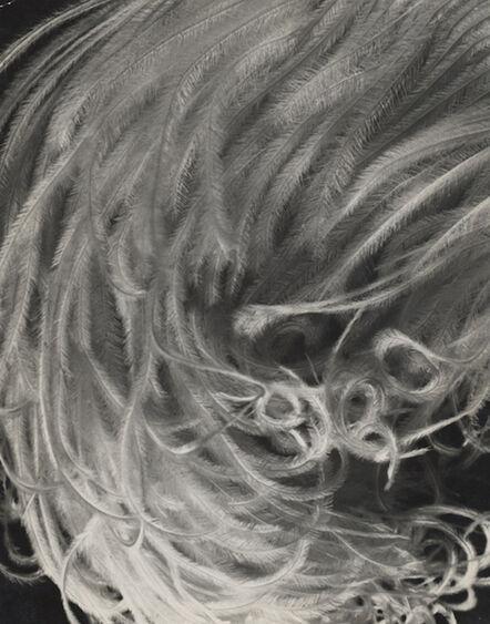 Elisabeth Hase, 'Feder (feather)', 1931