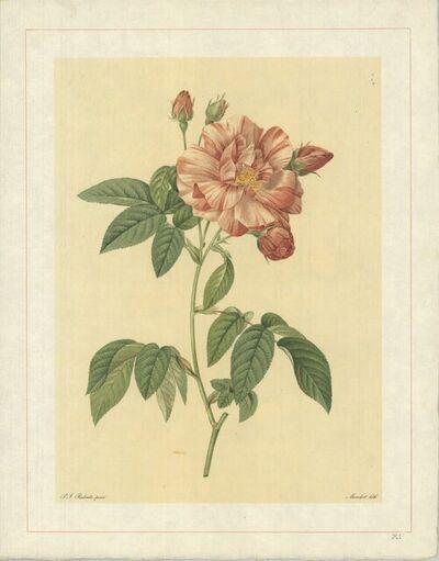 Pierre Joseph Redouté, 'Rosa Gallica Versicolor; Rosier de France a fleurs panachees', 1938