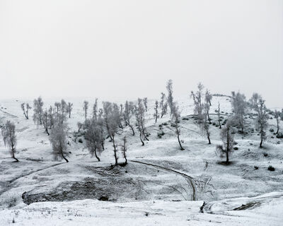 Tamas Dezso, 'Trees (Suceava, North Romania), 2012, from the series Notes for an Epilogue', 2012