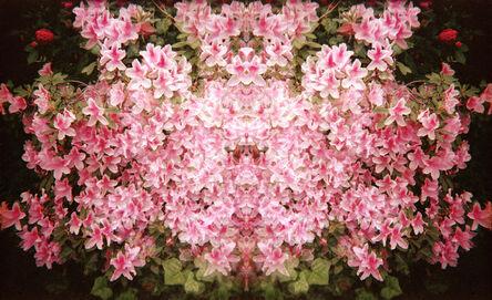 Ellen Stagg, 'Flowers of Pink', 2015